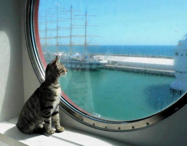 Sailing Cat
